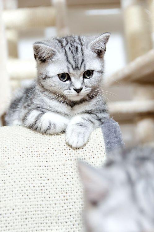 die besten 25 h bsche katzen ideen auf pinterest baby katzen cute baby k tzchen und katzen bad. Black Bedroom Furniture Sets. Home Design Ideas
