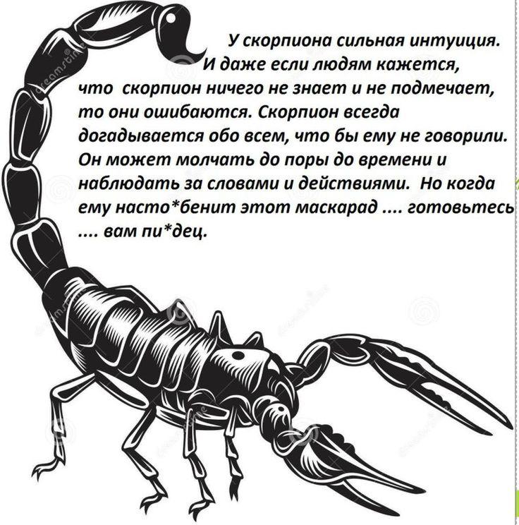 Картинки скорпиона приколы