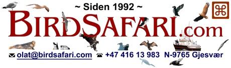 BirdSafari a/s – Fuglesafari guiding ved Nordkapp