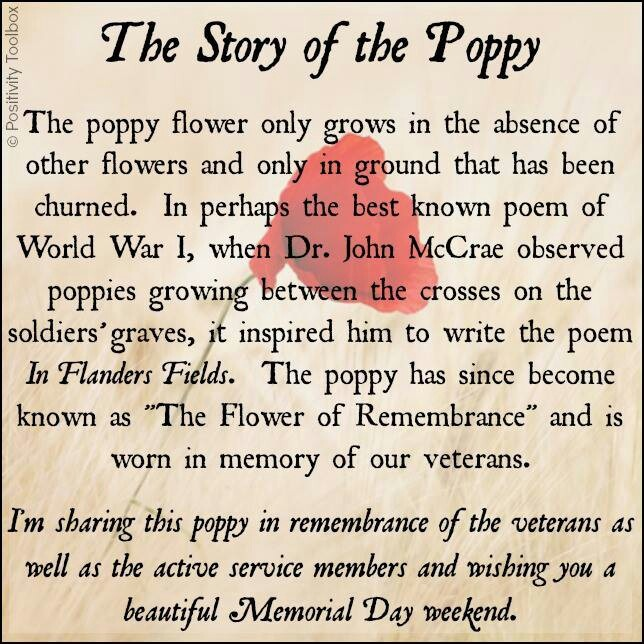 This is why I want my poppy tattoo, grandpa was a veteran and died the day after memorial day.