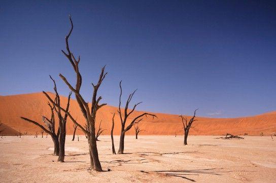 あの世に一番近い場所!ナミビアのナミブ砂漠にある死の沼地「デッドフレイ」 http://eedu.jp/blog/2013/05/20/zekkei_q024/