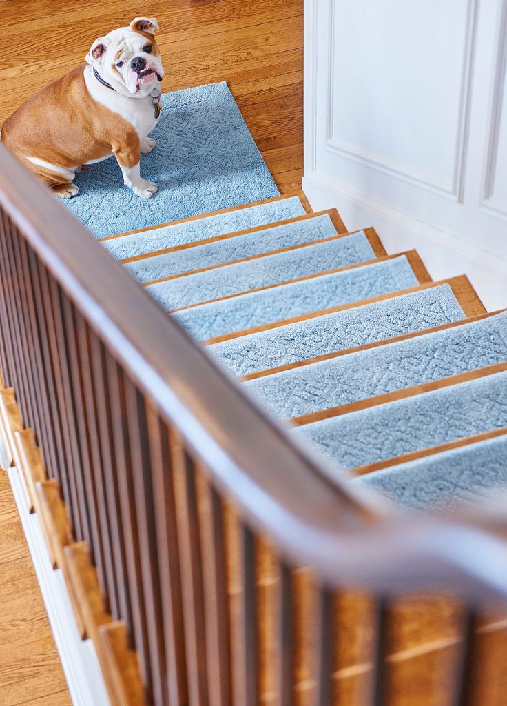 These Stair Treads Help Give Pets (and People) The Traction They Need And  Spice