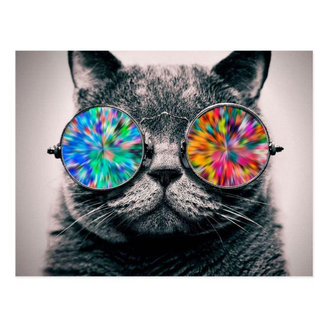 Cat Wearing Psychedelic Glasses Postcard Zazzle Com Grey Cats Cat Background Cat Glasses Cat wearing glasses wallpaper hd