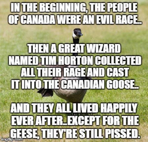 This is so true! Canadian Geese are evil evil beings in ontario toronto and around the country