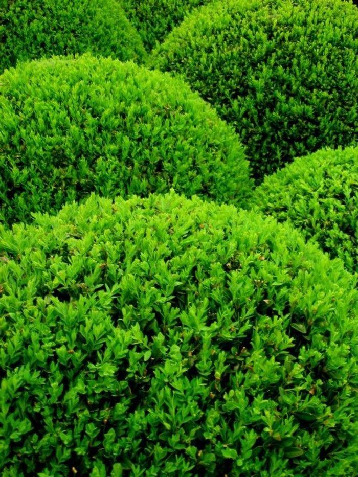 Les 60 meilleures images propos de mon jardin arbres for Quel arbre pour mon jardin