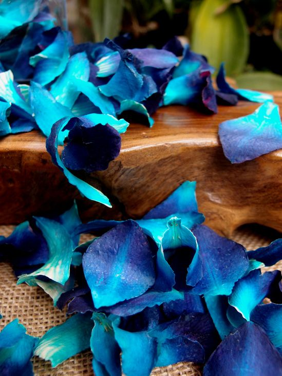 Preserved   Orchid Petals Dark Blue  $11 box / 3 boxes for $10 each
