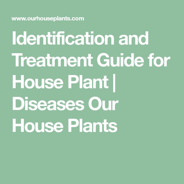 Identification and Treatment Guide for House Plant | Diseases Our House Plants