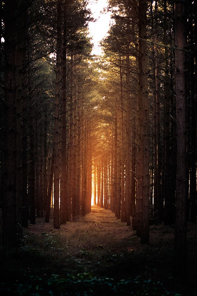 into the woods at sunset.
