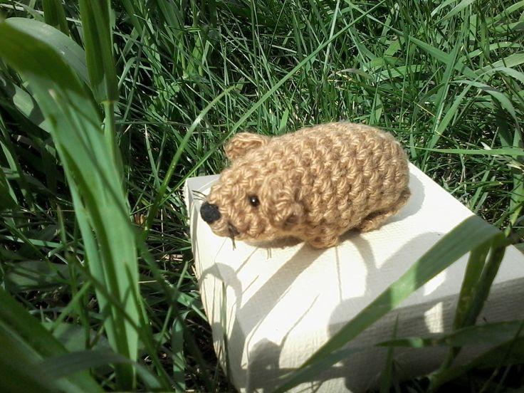 Вязаная морская свинка на прогулке  #вязаная игрушка, #amigurumi, #