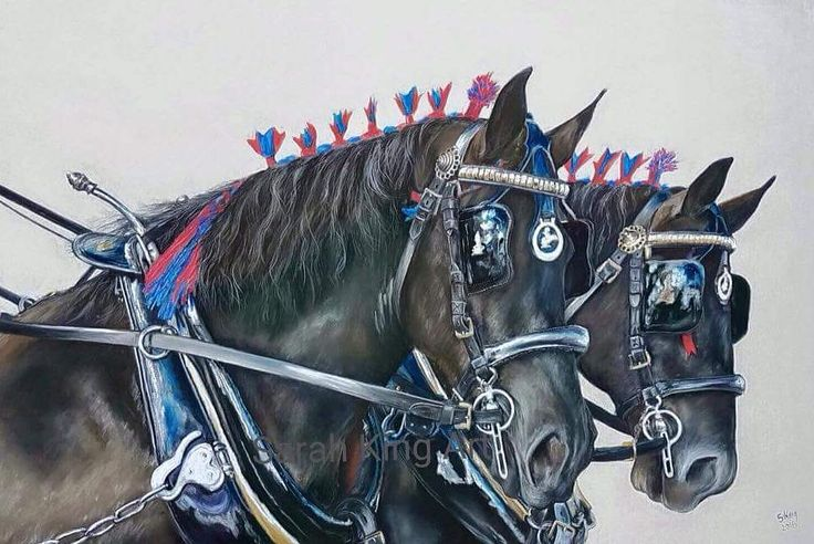"""""""Mi piace"""": 15, commenti: 1 - Sarah King (@sarah_king_art) su Instagram: """"Remember this one... must do more this size #horses #carriagehorse #carthorse #horse #equineart…"""""""