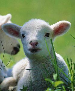 Il nostro appello per una Pasqua cruelty-free http://www.ehabitat.it/2014/04/13/per-una-pasqua-cruelty-free/