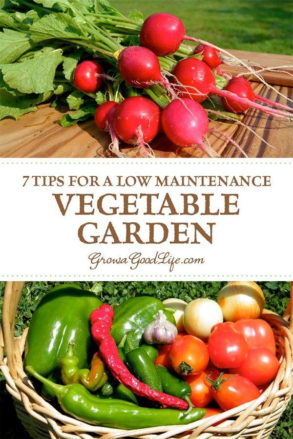 7 Tipps für einen pflegeleichten Gemüsegarten