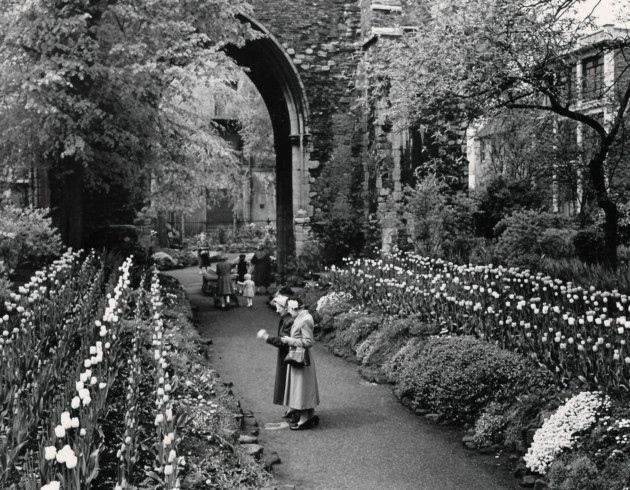 Gardens and parks. Pictured: Tulip time in King's Lynn Tower Gardens. Date: 1952. Picture: EDP Library