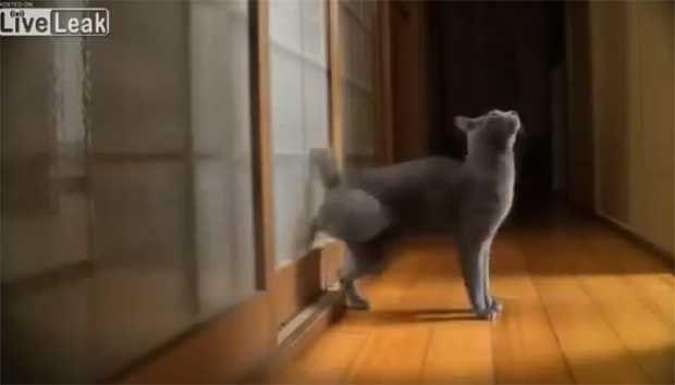 Γάτα χτυπάει την πόρτα μέχρι... να της ανοίξεις (ΔΕΣ ΤΟ video) http://bit.ly/1j1qonX