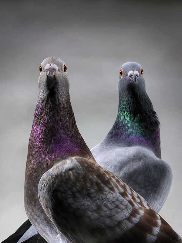 We have a lot of pigeons around here. Maybe I can teach a few to be carrier pigeons!