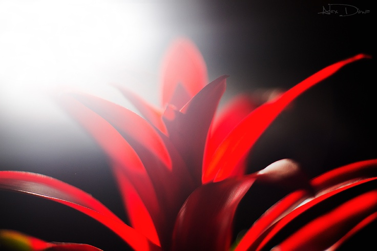 A special contre jour on a red flower.