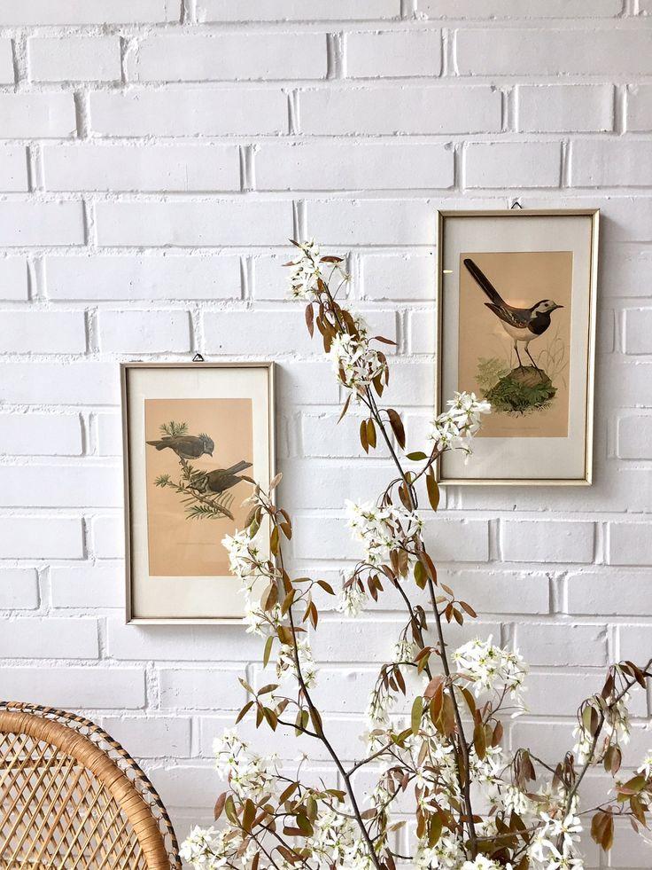 Vintage Lithografie, Vogelbilder set von zwei, original Kunstdruck, antike Schautafel, Vintage Mid Century Art, Made in Germany von moovi auf Etsy