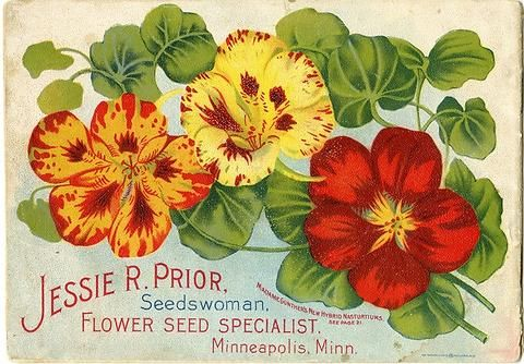 These nasturtium dance playfully across the back cover of Jessie Prior's 1901 seed catalog.