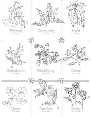 herbs coloring pages - photo#8
