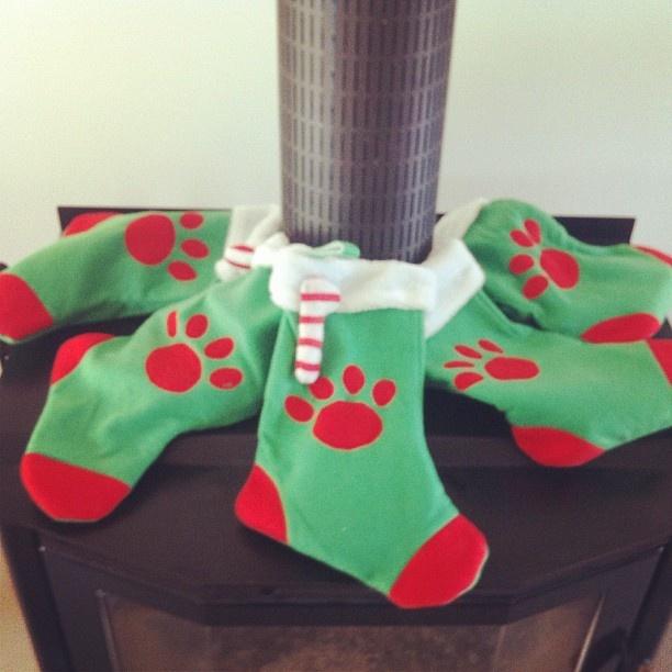 Santa sacks for all five furry babies!