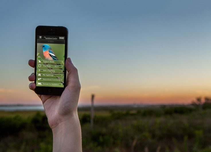Online Crowdsourcing for Impact: the Audubon Bird Guide App helps with the public annual bird counts.