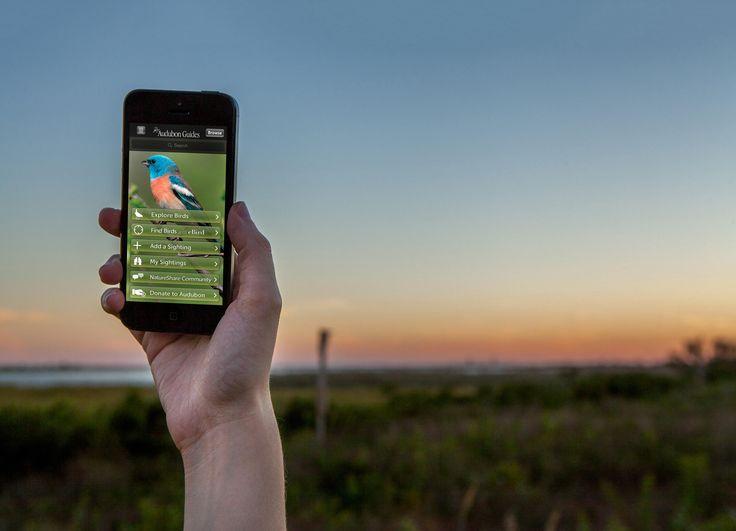 Audubon Bird Guide App