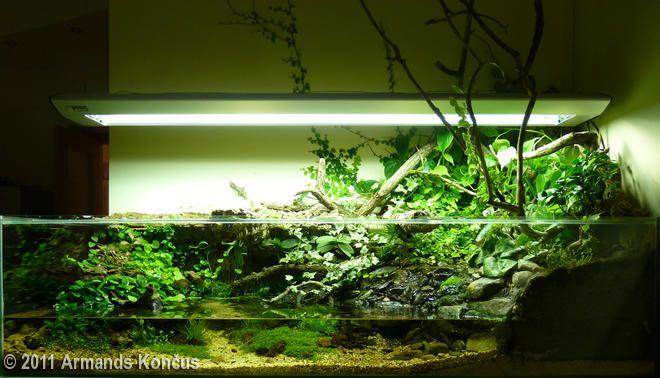 Aquatic Aquarium Garden Paludarium