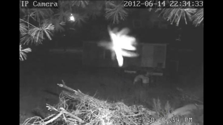 Real Fairy Caught on Security Camera, Proof Fairies are Real