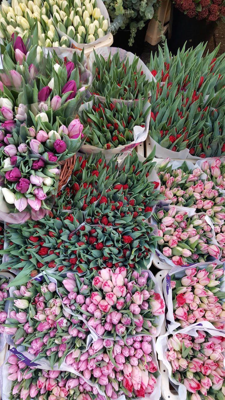 Bloemenmarkt - Mercado de Flores, Amesterdão | Viaje Comigo