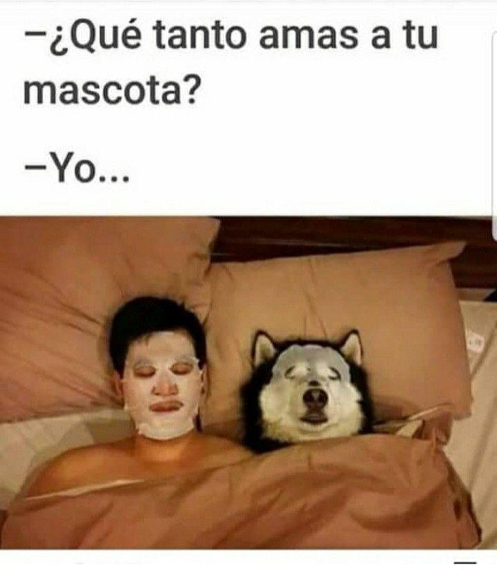 Amor Perruno Memes Divertidos Humor De Perros Chistes Divertidos