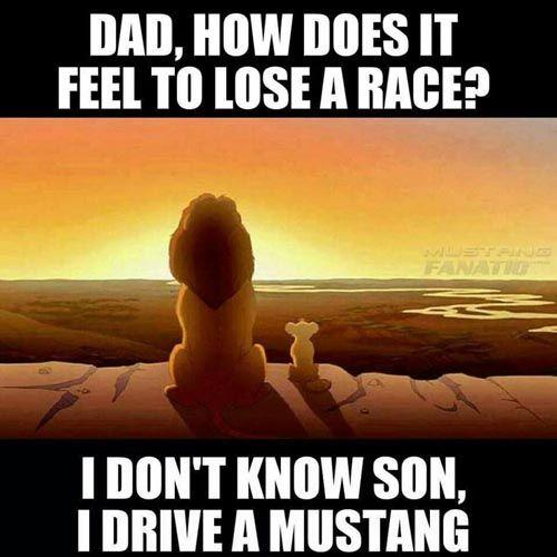 Mustang Meme: Lion King