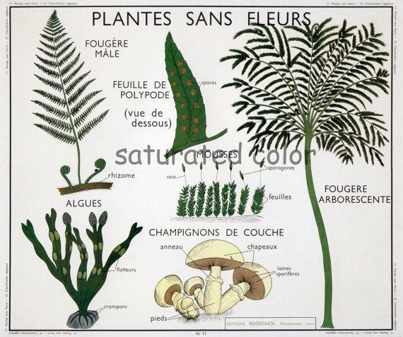 Vintage Ferns & Mushrooms Botanical Chart Print by SaturatedColor, $11.99