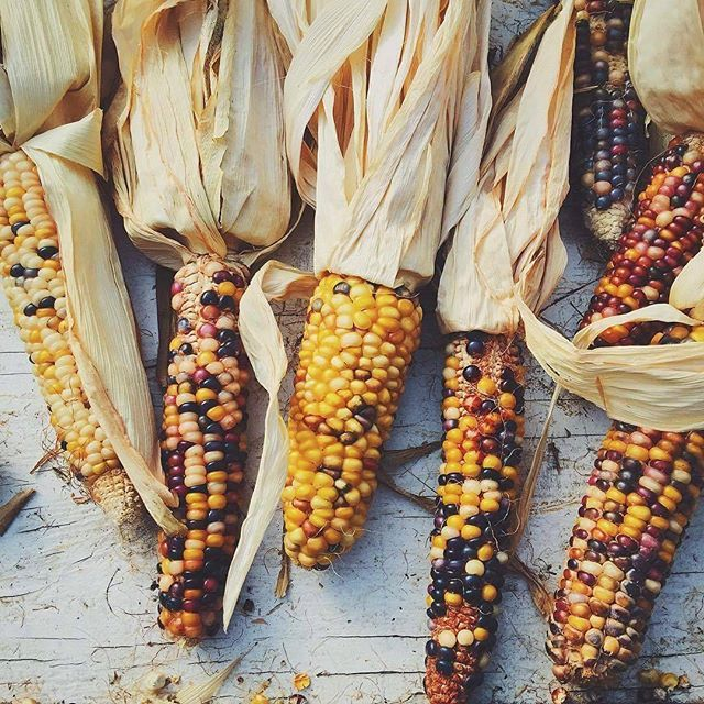 Photo of multi-coloured Flint #Corn, submitted by @amnakhawar1. Flint corn is named for its hard #kernels, which come in a multitude of colors  You can also submit your photos, videos and artwork to us by using the hashtag #dawndotcom.  #travel #world #colour #food #colours #cornonthecob #Flintcorn