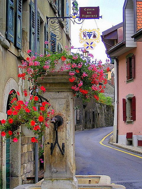 Epesses, Canton of Vaud, Switzerland  -      this shot reminds me of time spent in Zermatt.
