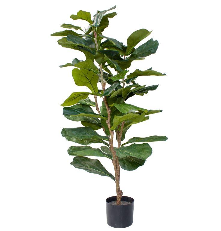 Fiddle Leaf Fig Tree 90cm - Matt Blatt