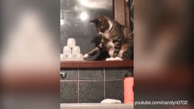 Compilation Of Cats Being Jerks And Knocking Things Over