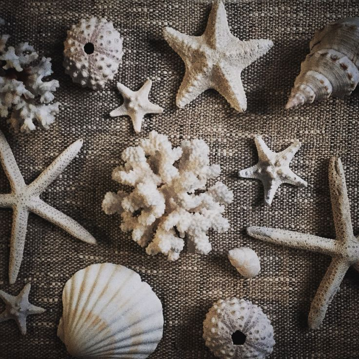Shells and things