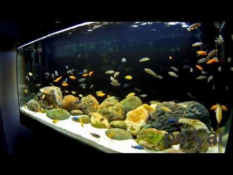 African Cichlids Aquarium - Lake Malawi