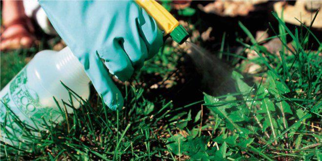consejos-para-preparar-pesticida-organico-casero