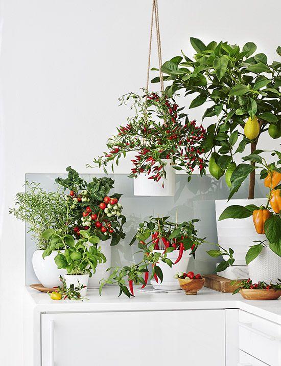 dyrke grønnsaker inne