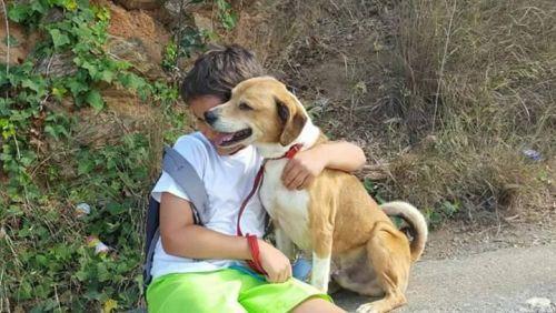 TOBBY Type : Beagle Sexe : Mâle Age : Junior Couleur : Tricolore Taille : Petit Lieu : Paris - 75 (Île-de-France)  Refuge : ALERTE-SOS(Paris)  Tél : 06.61.27.04.46 OU 0142511879                 Tobby est un petit beagle croisé de 9 mois, très mignon et super attachant, il est très sociable avec les gens et ses congénères