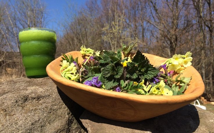 Prišla jar! Poďme sa najesť do prírody!  | Zaježka portál