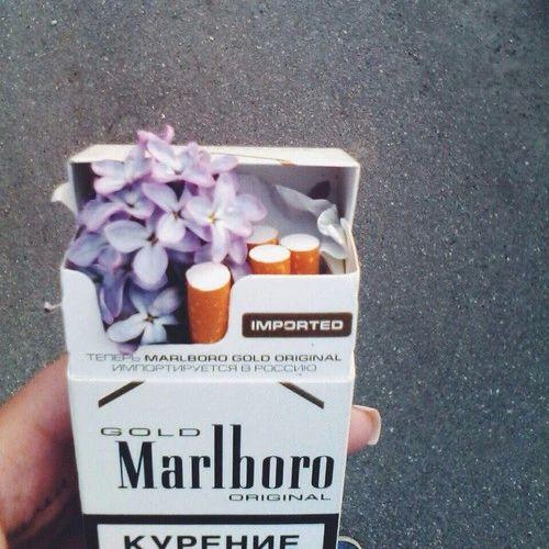 #cigarette #cigi #cigaretta #Marlboro #gold Flower #purpleflower