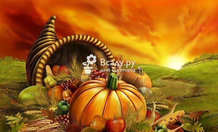 День Благодарения: история праздника, украшение дома, лучшие рецепты