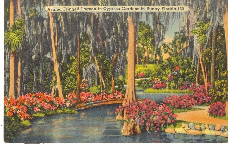 Vintage Florida Linen Postcard Cypress Gardens Azalea Fringed Lagoon Sunny