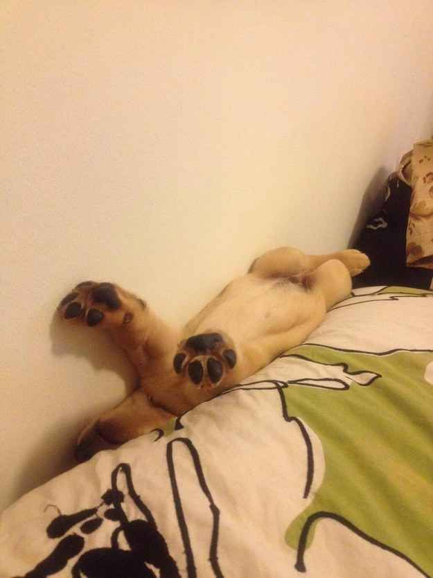 HALP, I'M STUCK. | 61 Times Golden Retrievers Were So Adorable You Wanted To Cry