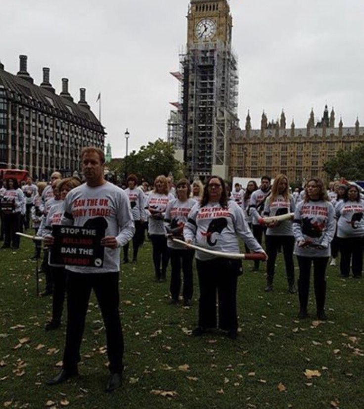 #GMFER2017 - Twitter Search  MEGAN CARR @MEGANJEWELSCARR  Oct 7 More #GMFER2017 #LONDON #JusticeforWildlife Silent Protest  organised to back the proposed complete ban of #ivory @EleRhinoMarch @RHINOSINAFRICA