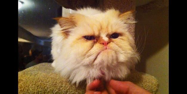 Cute Grumpy Animals | Animmalia :) | Pinterest