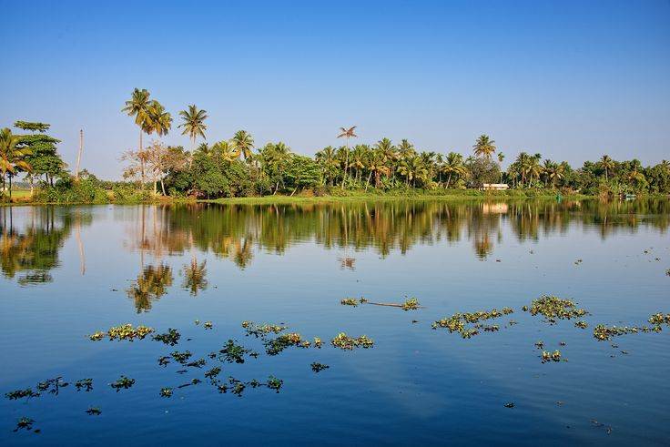 https://flic.kr/p/nU8Zxf | Trees reflection on the water, Alleppey, Kerala, India
