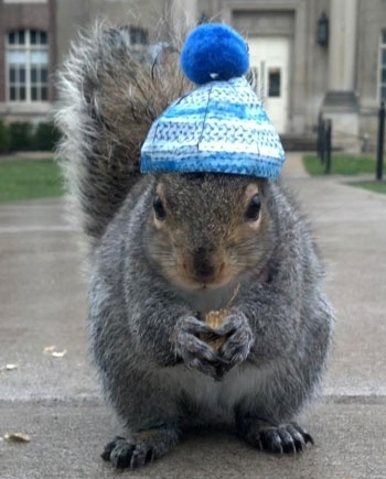 Best Squirrel Images On Pinterest Beautiful - Student befriends campus squirrels then dresses them in the cutest outfits ever
